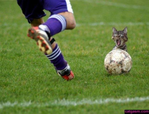 http://starnaked.narod.ru/pic11/hum/cat003.jpg