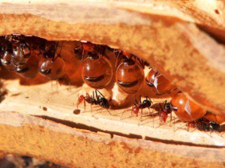 Обычные муравьи передвигаются по дорожкам в определенном