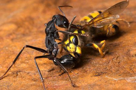 И помогает - муравей, увеличенный до размеров автомобиля...