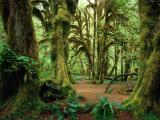 обои для рабочего стола природа - лес