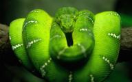 новые обои - змея