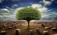 новые обои - последнее дерево