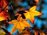 обои осень - листья