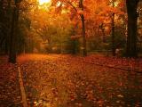 обои осень - опавшие листья