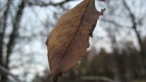 обои осень - засохший лист