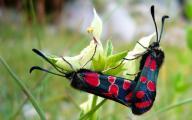 Обои - бабочки на цветах